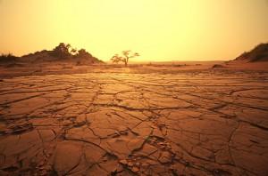 砂漠 カピカピ