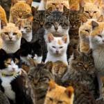 ネコの聖地、猫島に行ってきました!!そこはもう天国!?