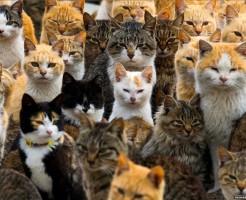 ネコ 猫島