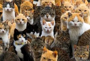 ネコ 大量 猫島